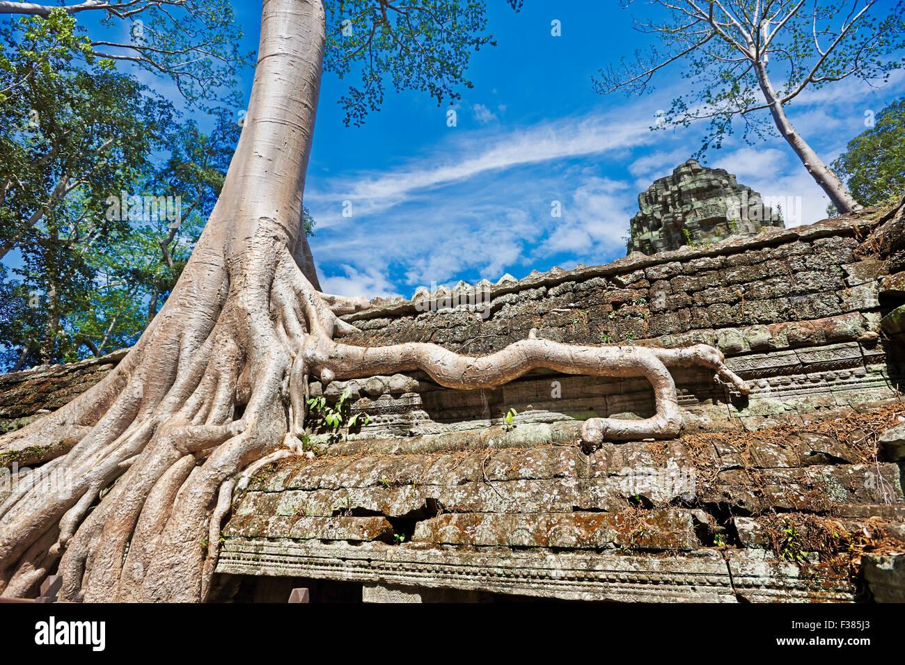 Ta Prohm temple. Parc archéologique d'Angkor, la Province de Siem Reap, au Cambodge. Photo Stock