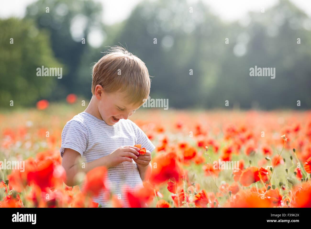 Smiling Boy standing dans un champ de coquelicots Photo Stock