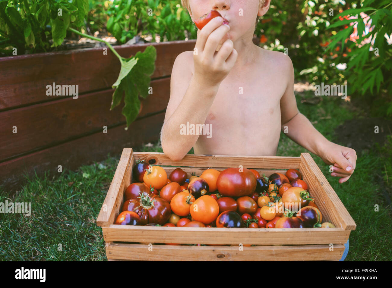 Close-up of a Boy eating une tomate fraîchement cueillie Banque D'Images