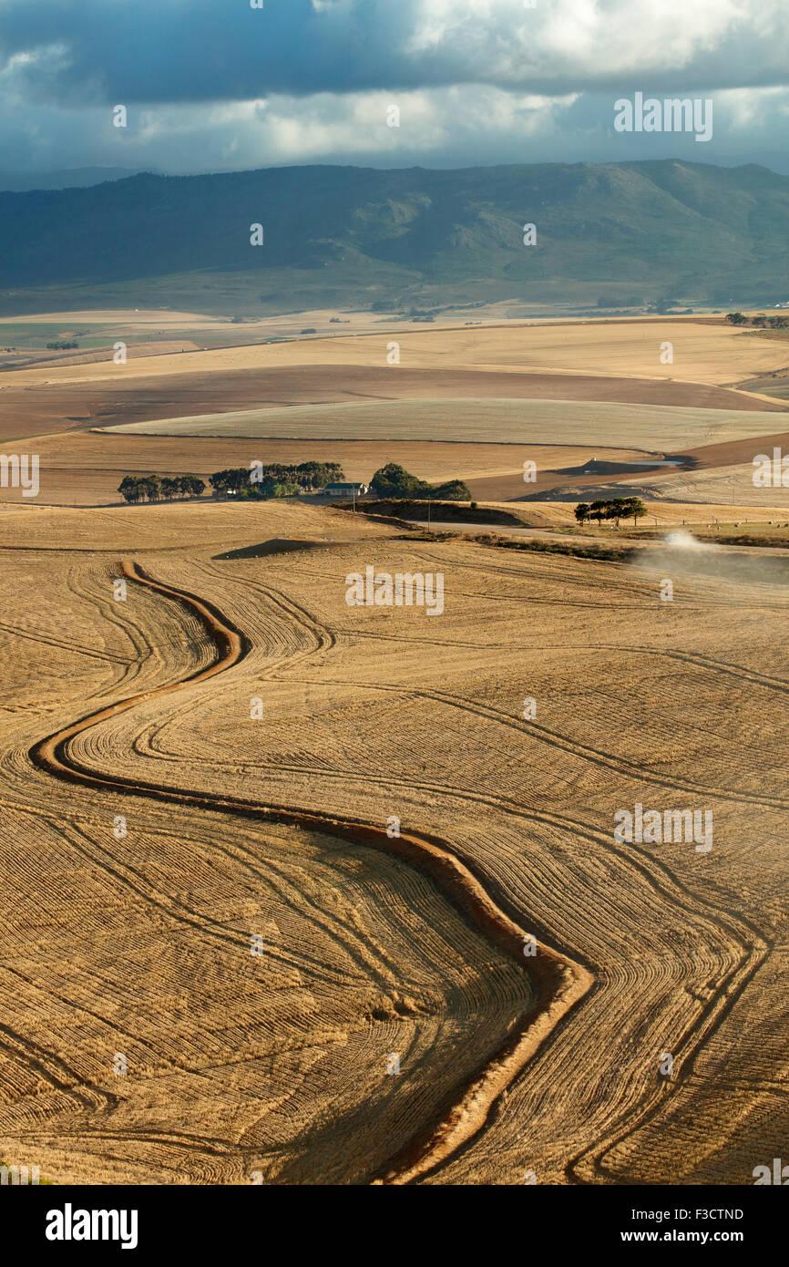 Terres agricoles vallonnées dans la région d'Overberg près de Villiersdorp, Western Cape, Afrique Photo Stock