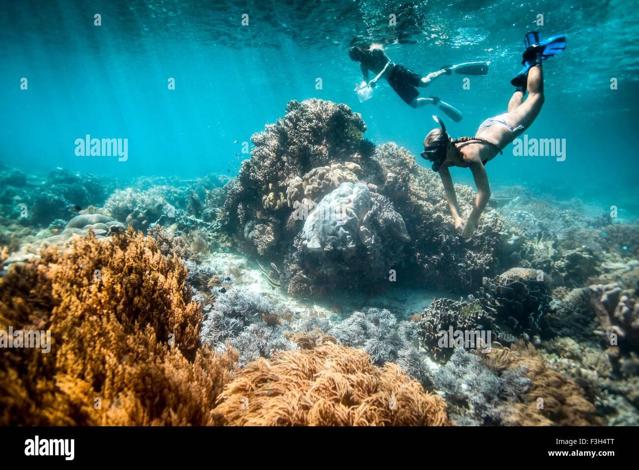 Deux plongeurs libres effectuer des enquêtes scientifiques sur les coraux et poissons, Raja Ampat, Papouasie occidentale, Banque D'Images