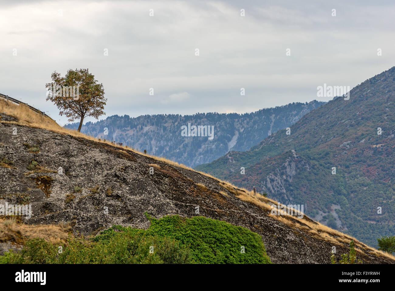 Lonely tree sur le versant des montagnes rocheuses Banque D'Images