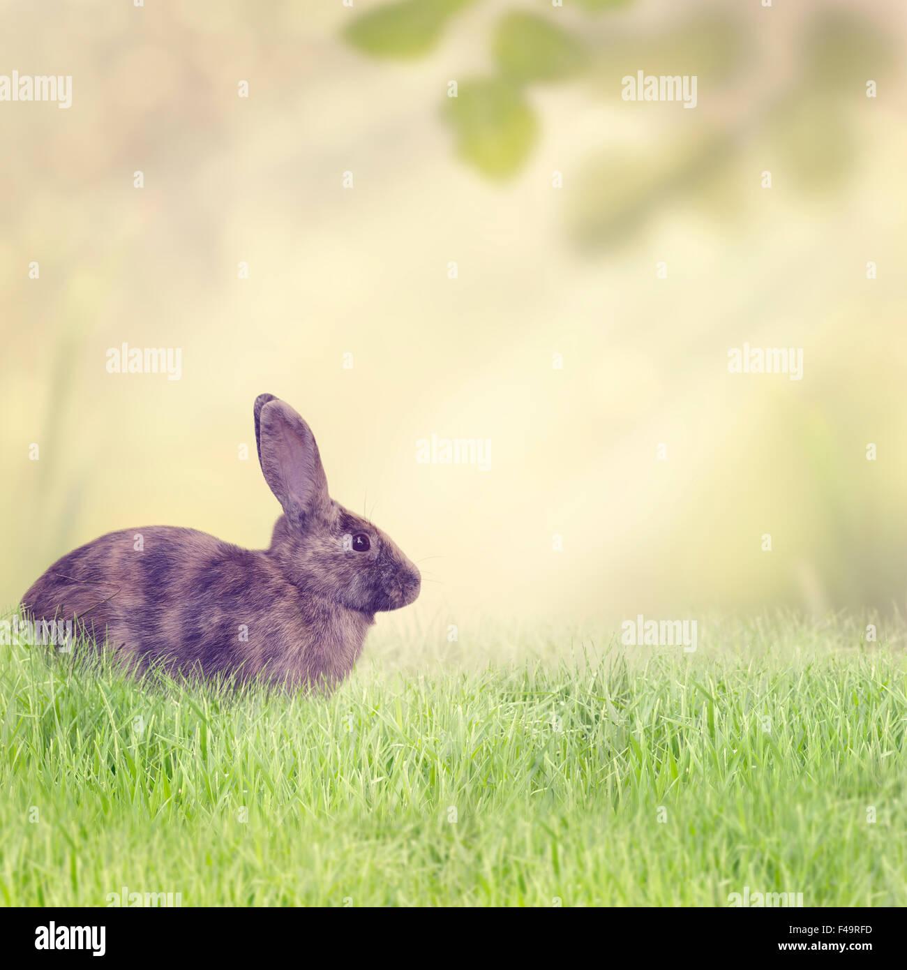 Lapin assis dans l'herbe Photo Stock