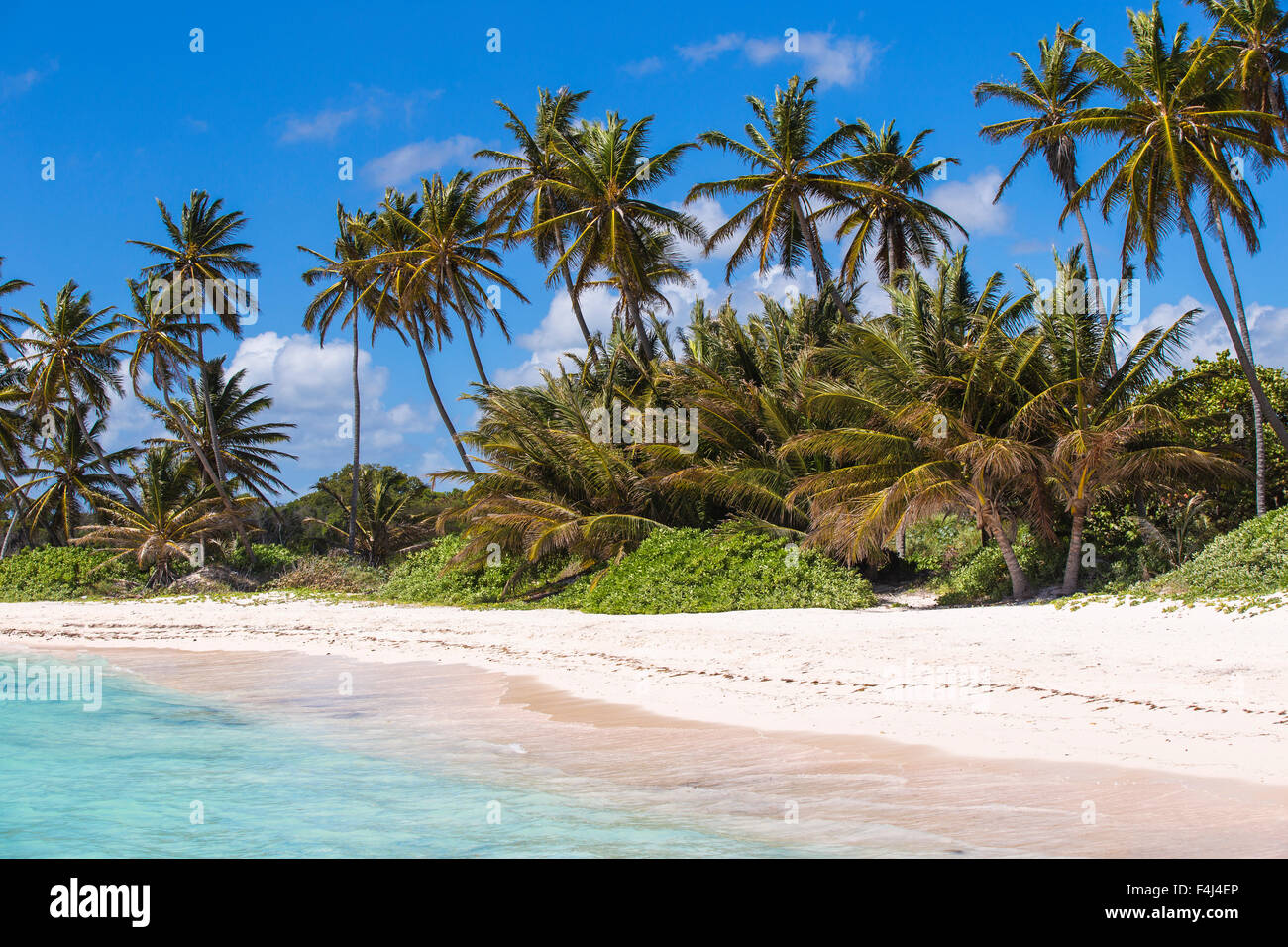 Playa Blanca, Punta Cana, République dominicaine, Antilles, Caraïbes, Amérique Centrale Banque D'Images