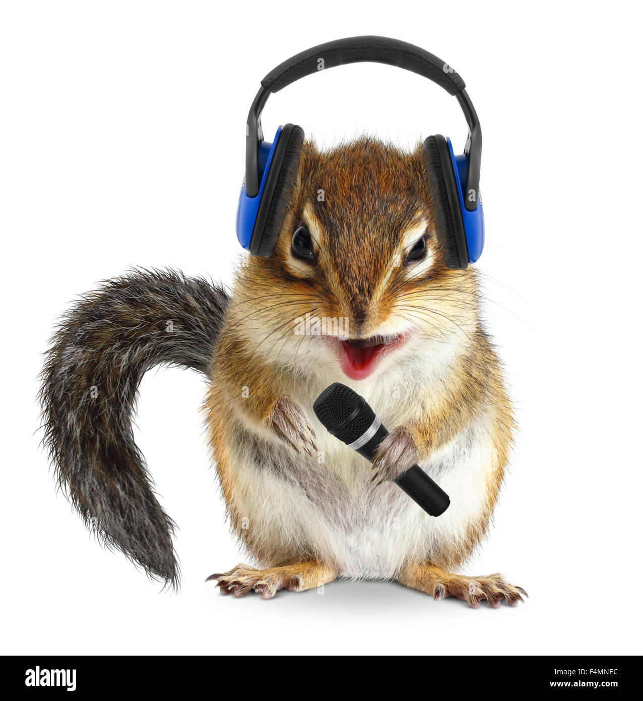 Funny chipmunk dj avec casque et microphone Photo Stock