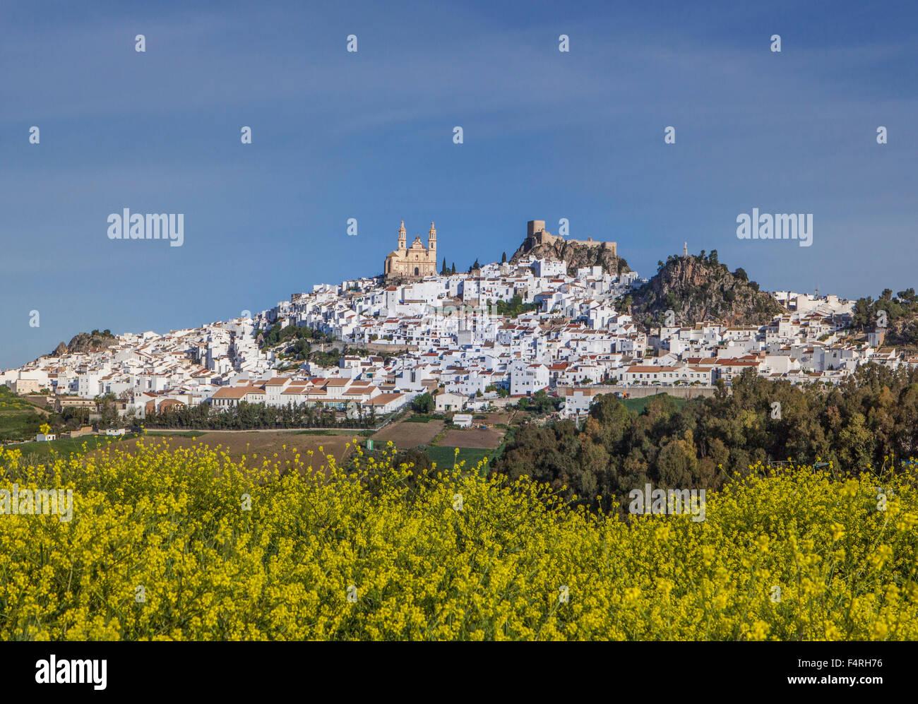 L'Andalousie, région, province de Cadix, Paysage, ville, Olvera, Espagne, Europe, Printemps, architecture, château, colorés, des fleurs, pas de Banque D'Images