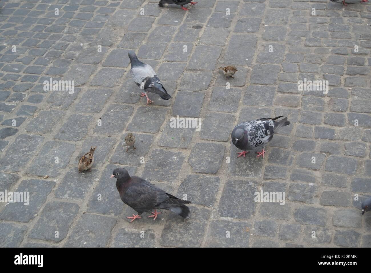 Plume d'Oiseau Pigeon moineaux route chemin coloré Photo Stock