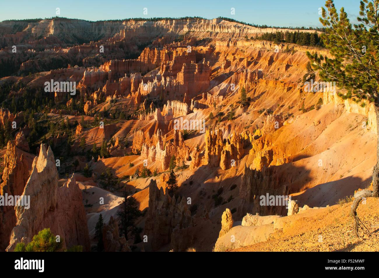 Vue de l'aube point, Bryce Canyon, Utah, USA Banque D'Images