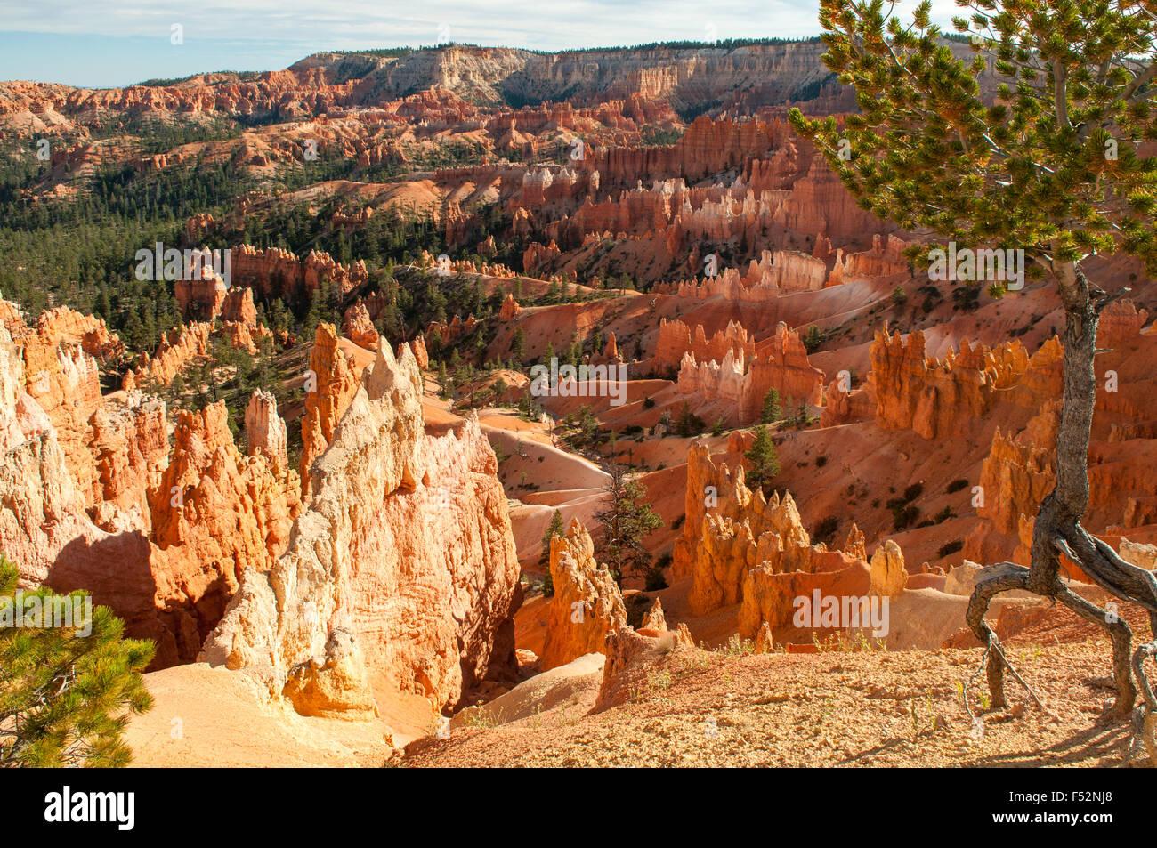 Vue depuis près de Sunset Point, Bryce Canyon, Utah, USA Photo Stock