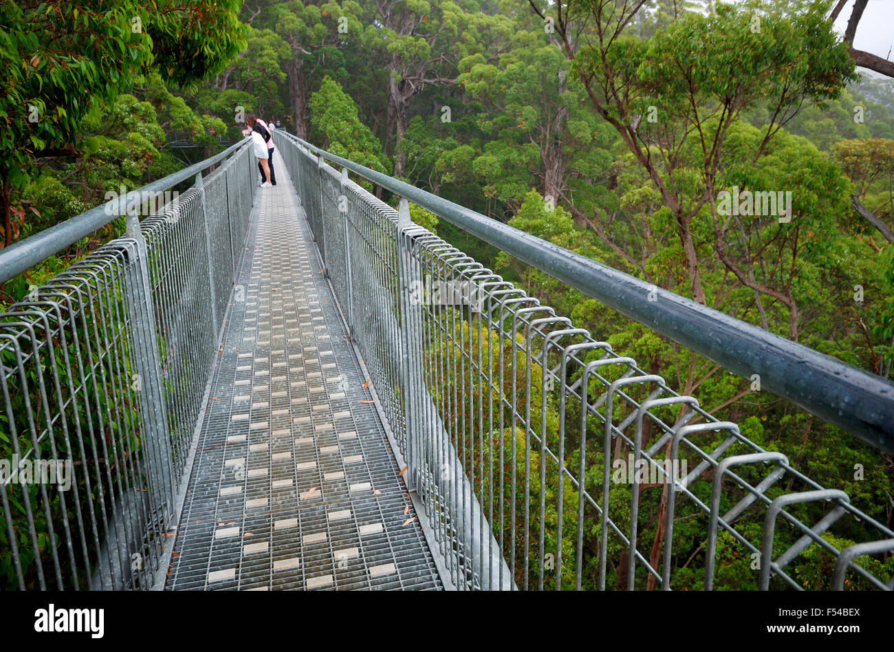 Treetop walk path Photo Stock