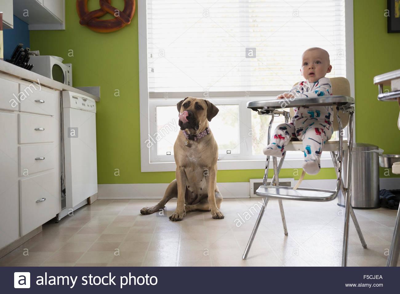 Curieux petit garçon et le chien dans la cuisine Photo Stock