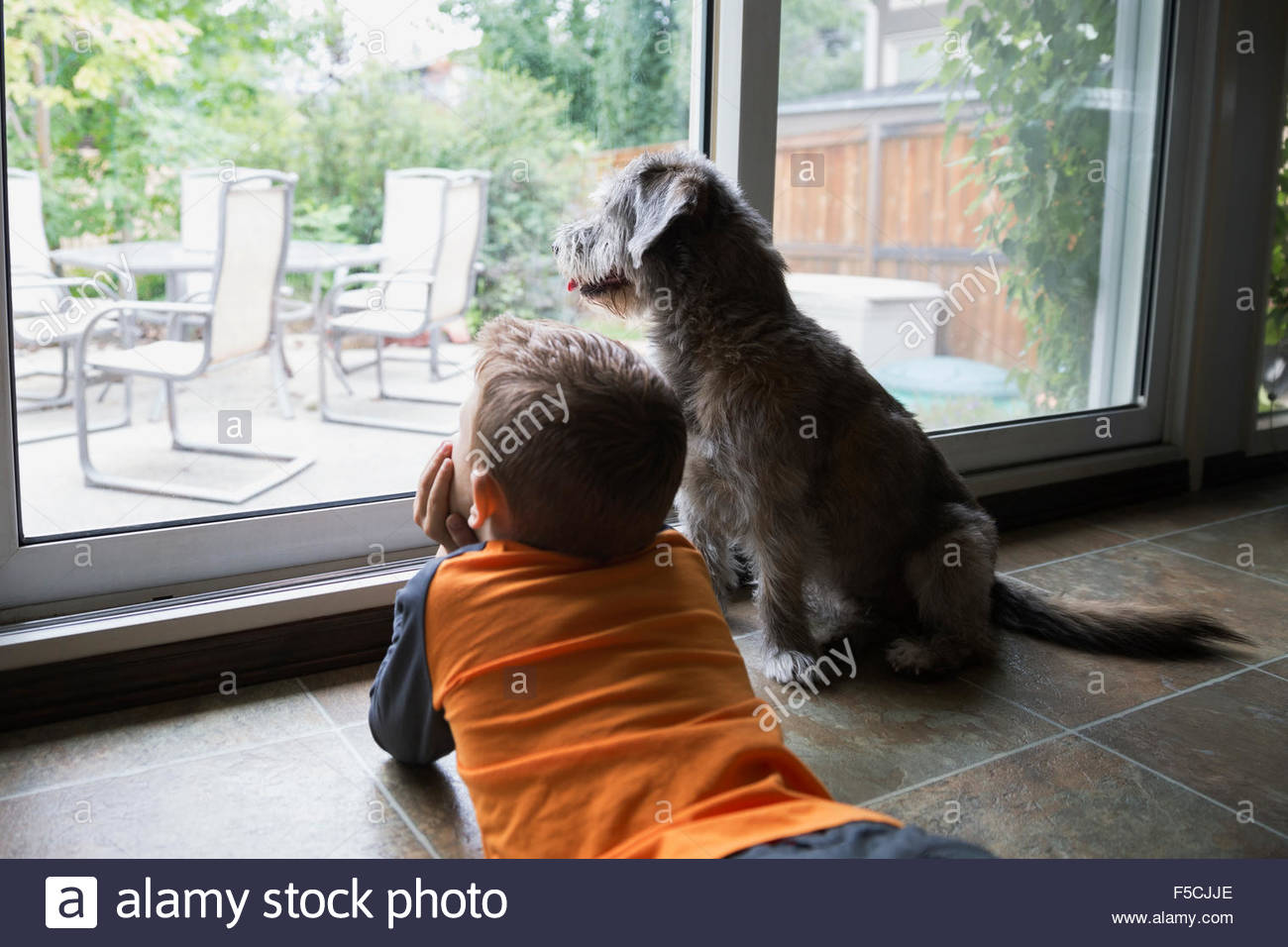 La pose en garçon curieux patio fenêtre avec chien Photo Stock