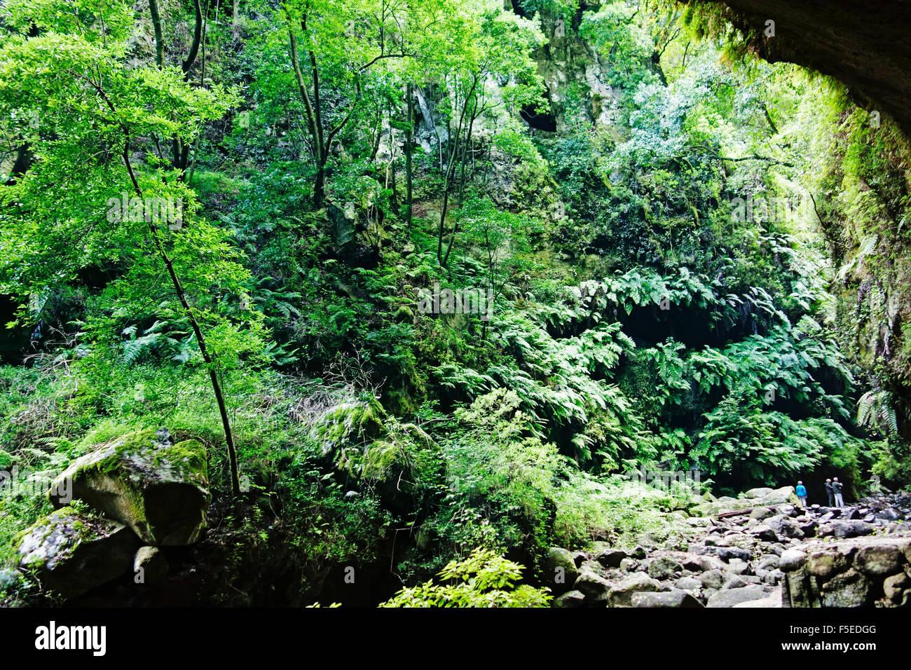 Los Tilos, forêt de lauriers de la biosphère, La Palma, Canary Islands, Spain, Europe Photo Stock
