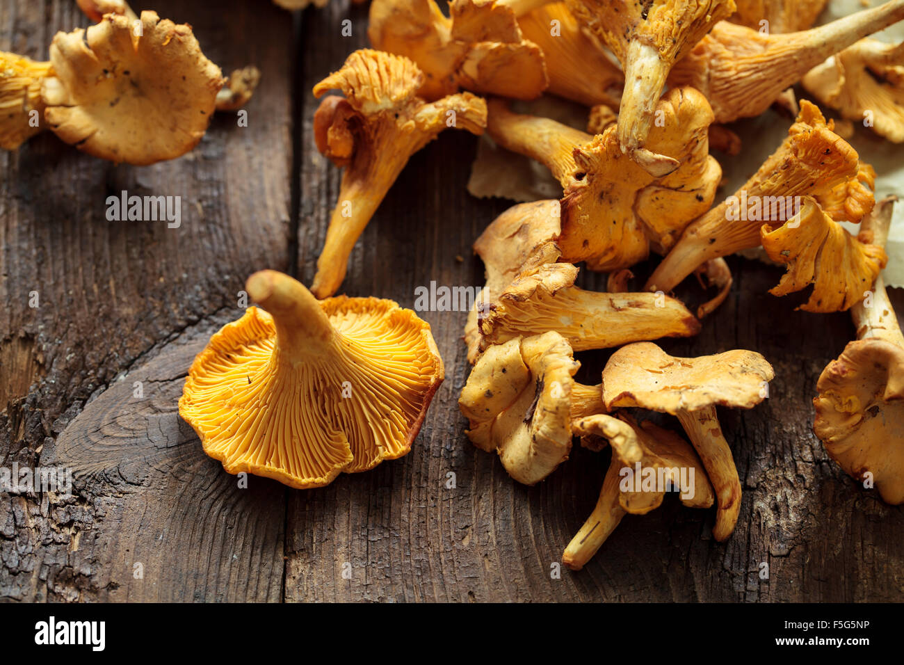 Champignons sauvages girolle Photo Stock