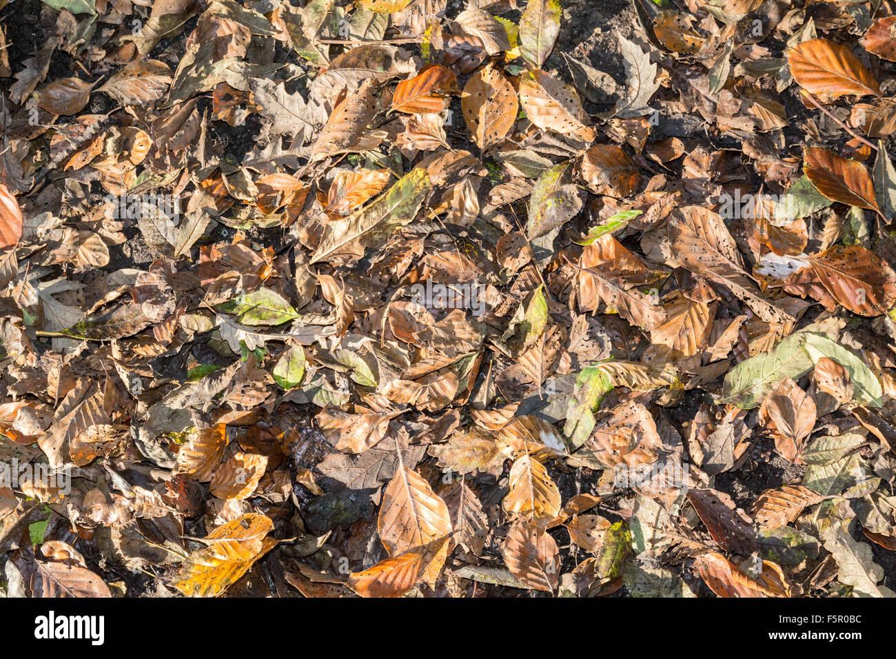 Feuilles d'automne sur un sol forestier Photo Stock