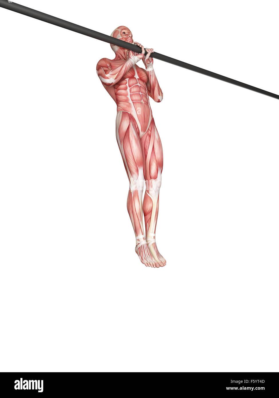 Illustration de l'exercice - tirez la poignée étroite ups Photo Stock