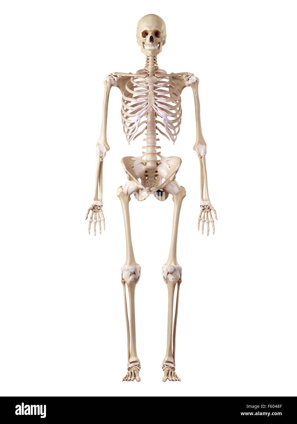 Précis de l'illustration médicale Photo Stock