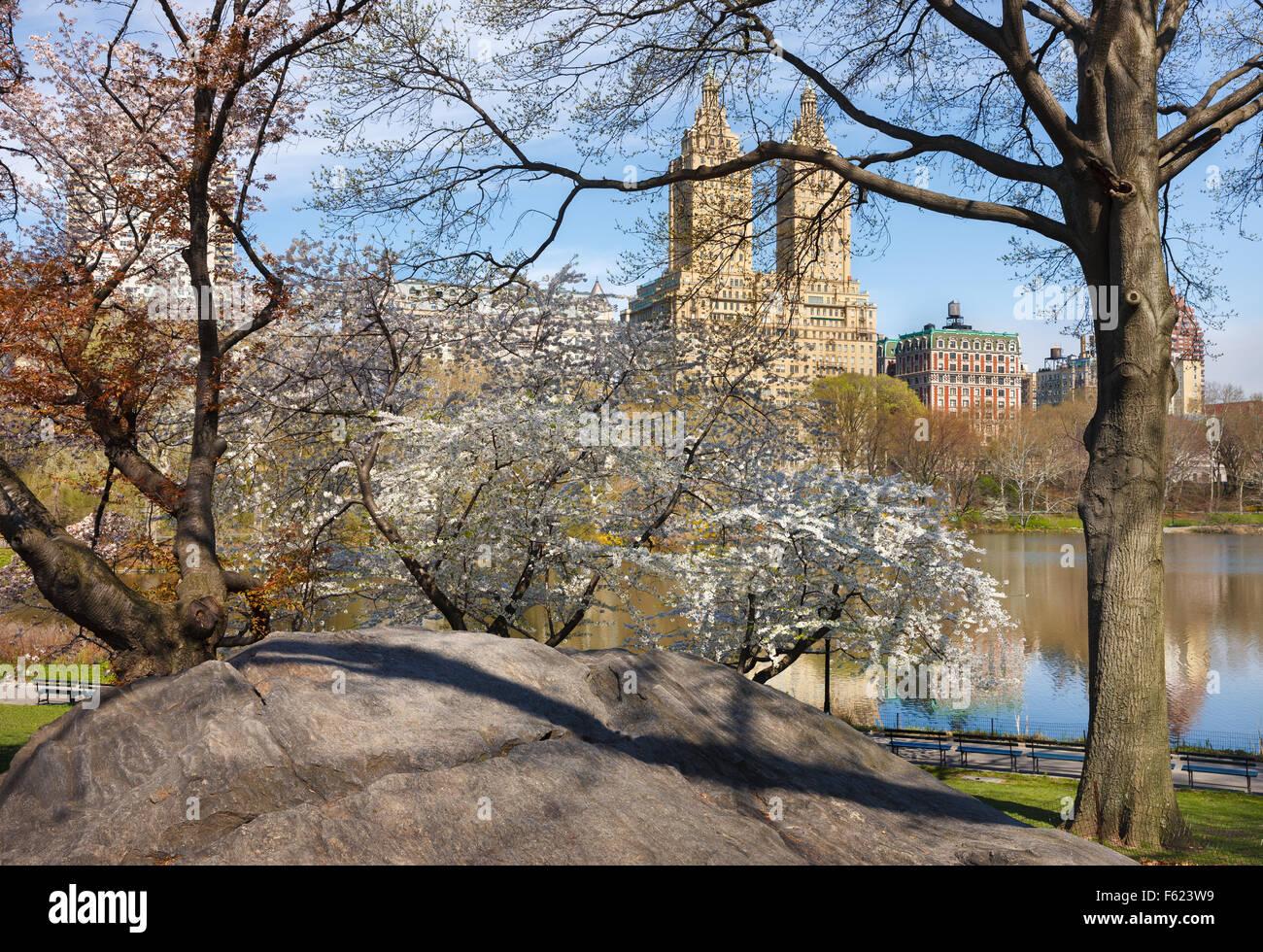 Central Park Lake avec Yoshino en fleurs de cerisiers au printemps, de l'Upper West Side de Manhattan, New Tork Photo Stock