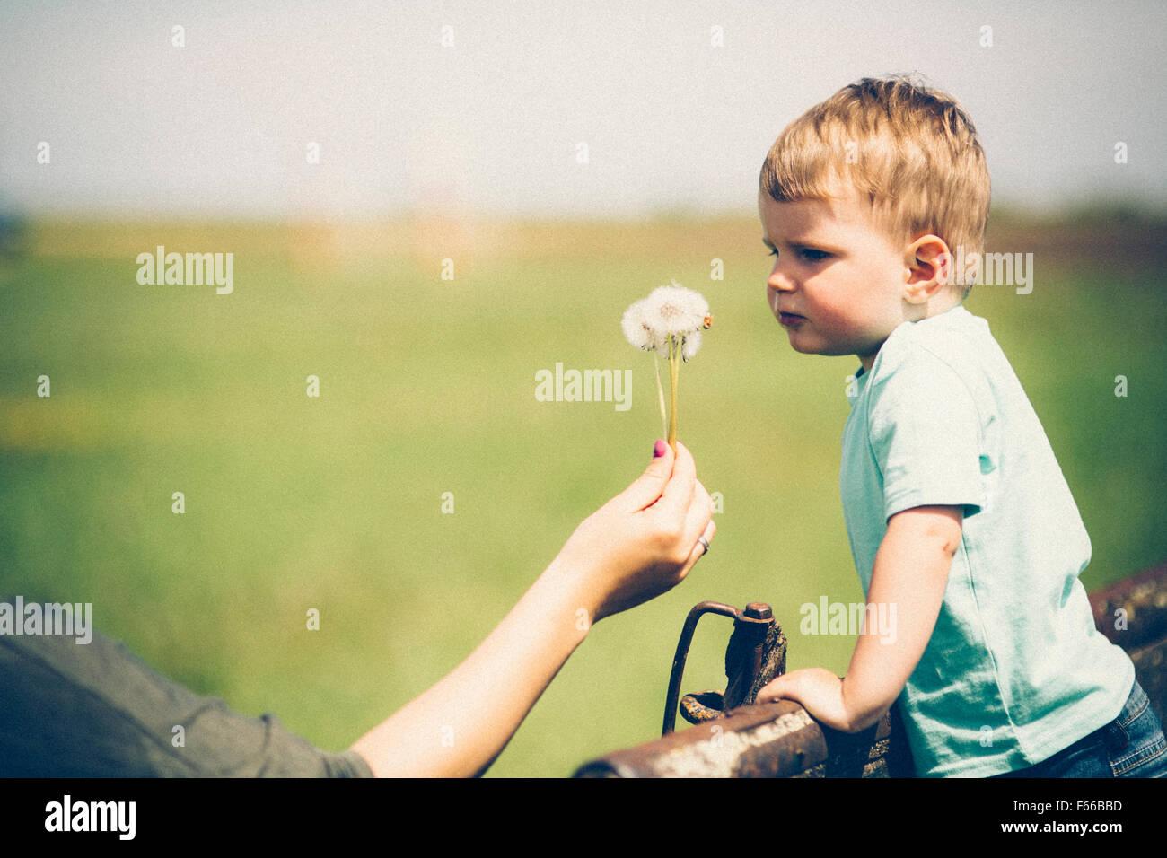 Société de portefeuille mère un pissenlit d'être soufflé par enfant Photo Stock