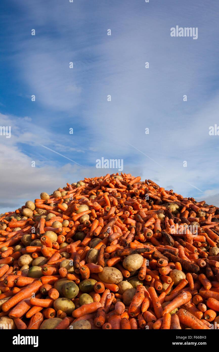 Déchets alimentaires déformés, légumes jetés après avoir été rejeté Photo Stock