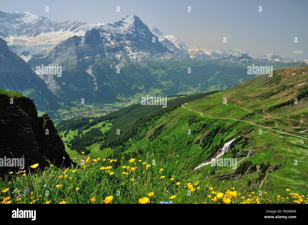 Grindelwald et de l Eiger (3970m), vu depuis le talus de fleurs sauvages au  premier abord. c151d0887bd2