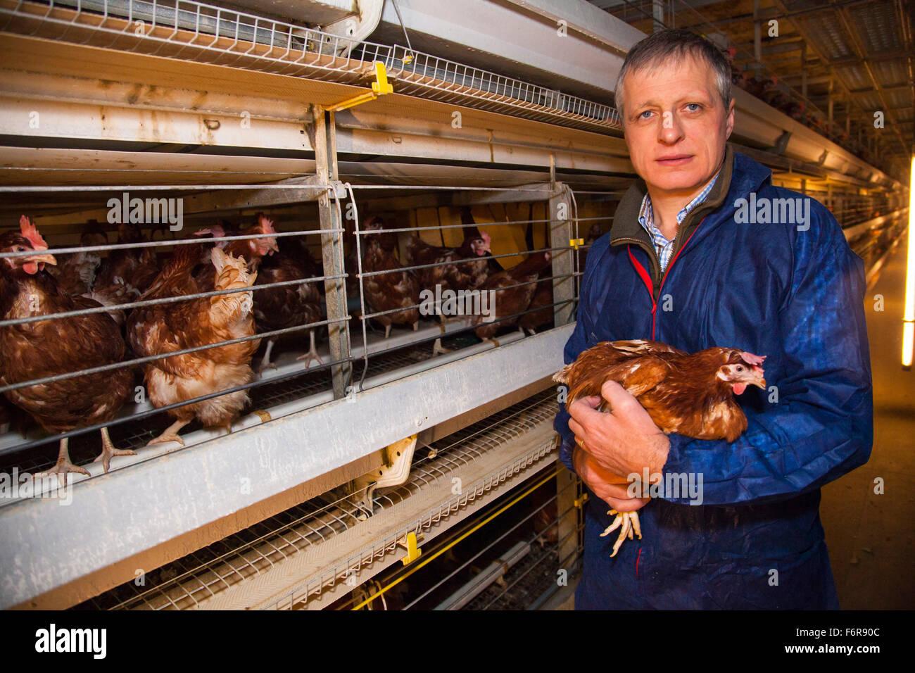 Duncan Priestner, poulet fermier. Banque D'Images