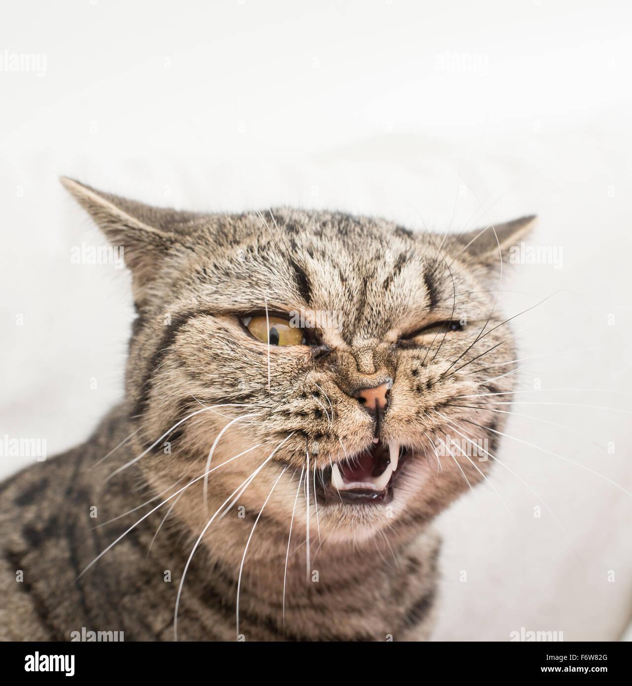 Cat avec drôle et fou d'expression. Visage de choc et de dégoût. Photo Stock