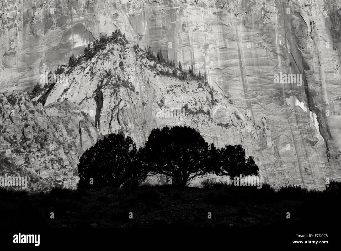 La silhouette des arbres et du Temple et les tours de la Vierge. Zion National Park, Utah Photo Stock