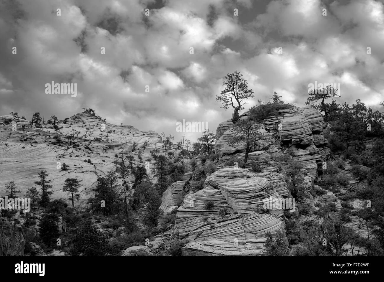 Voir des formations rocheuses dans le parc national de Zion, Utah Photo Stock