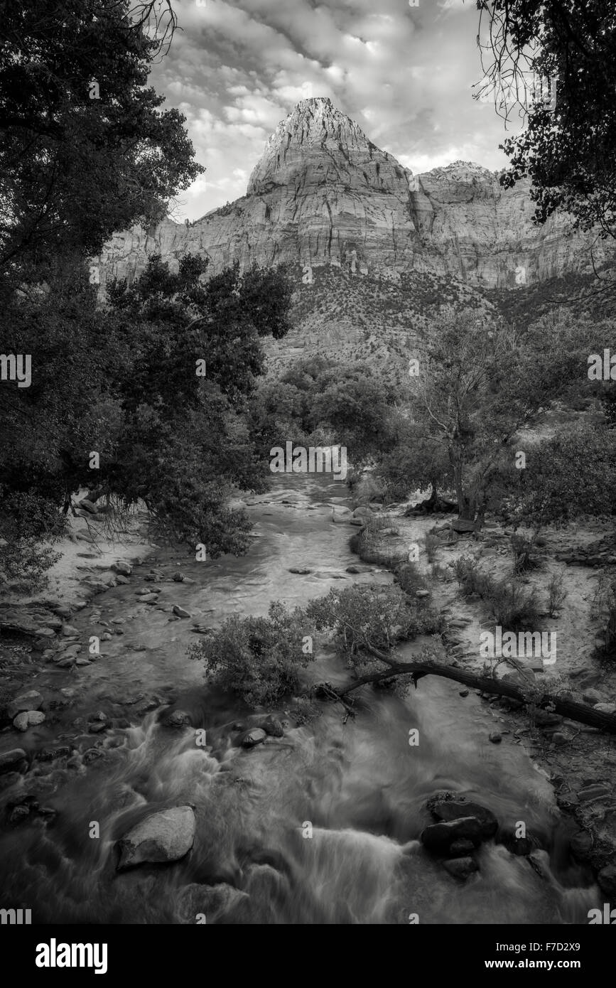 Virgin River et le pic avec des arbres cottonwood. Zion National Park, UT Photo Stock