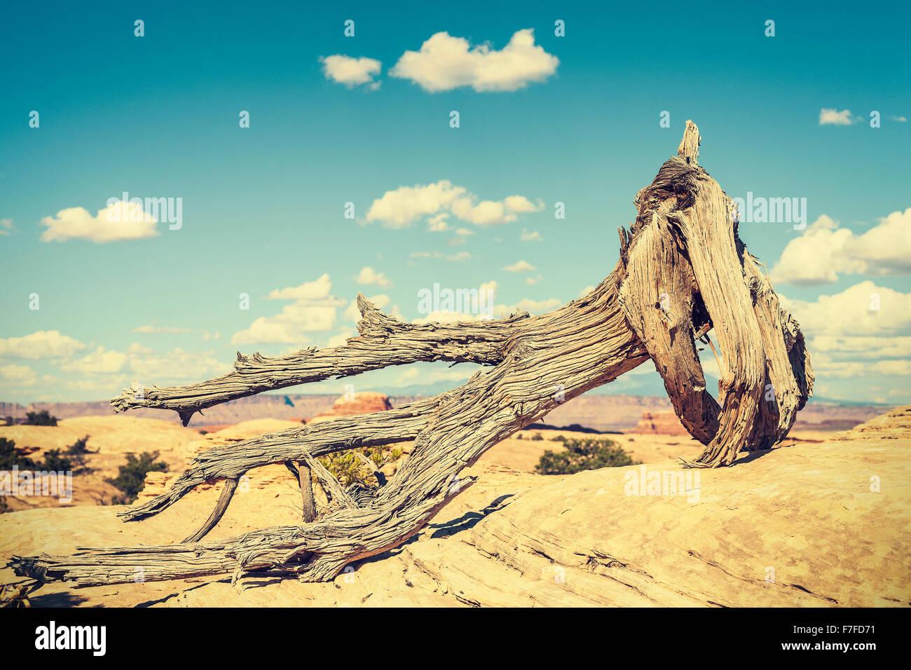 Arbre mort aux couleurs rétro, notion de changement climatique photo. Photo Stock