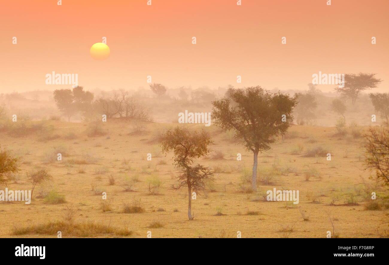 Lever du soleil dans le désert du Thar près de Jaisalmer, Rajasthan, India Photo Stock