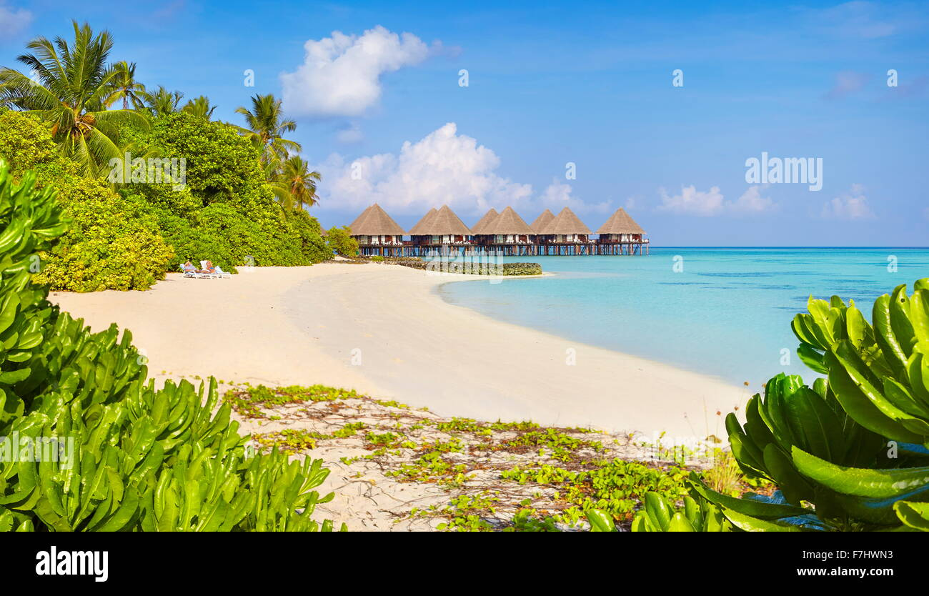 Tropical Beach at îles Maldives, Ari Atoll Photo Stock