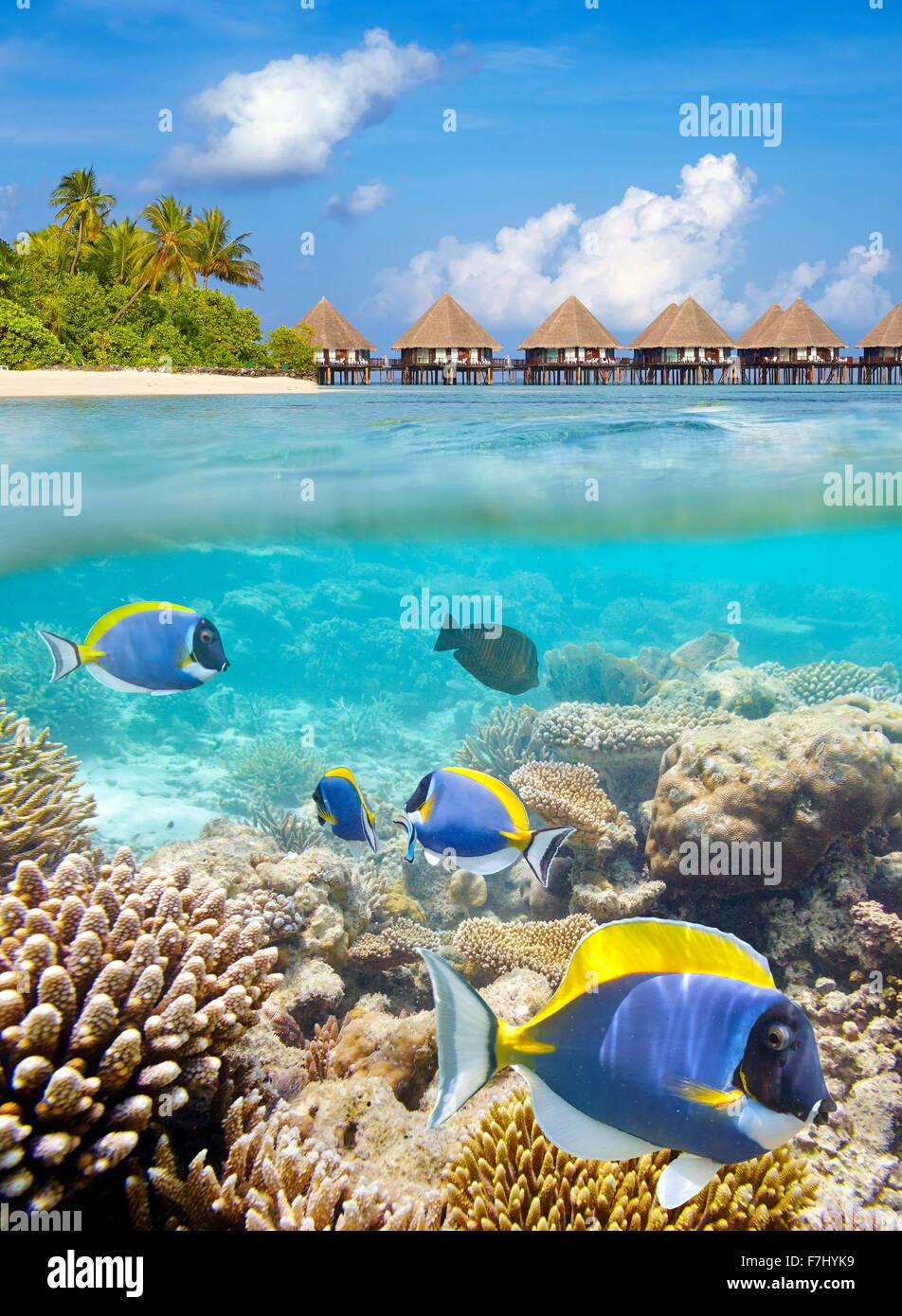 Vue sous-marine de poissons tropicaux et de corail, l'île des Maldives, Ari Atoll Banque D'Images