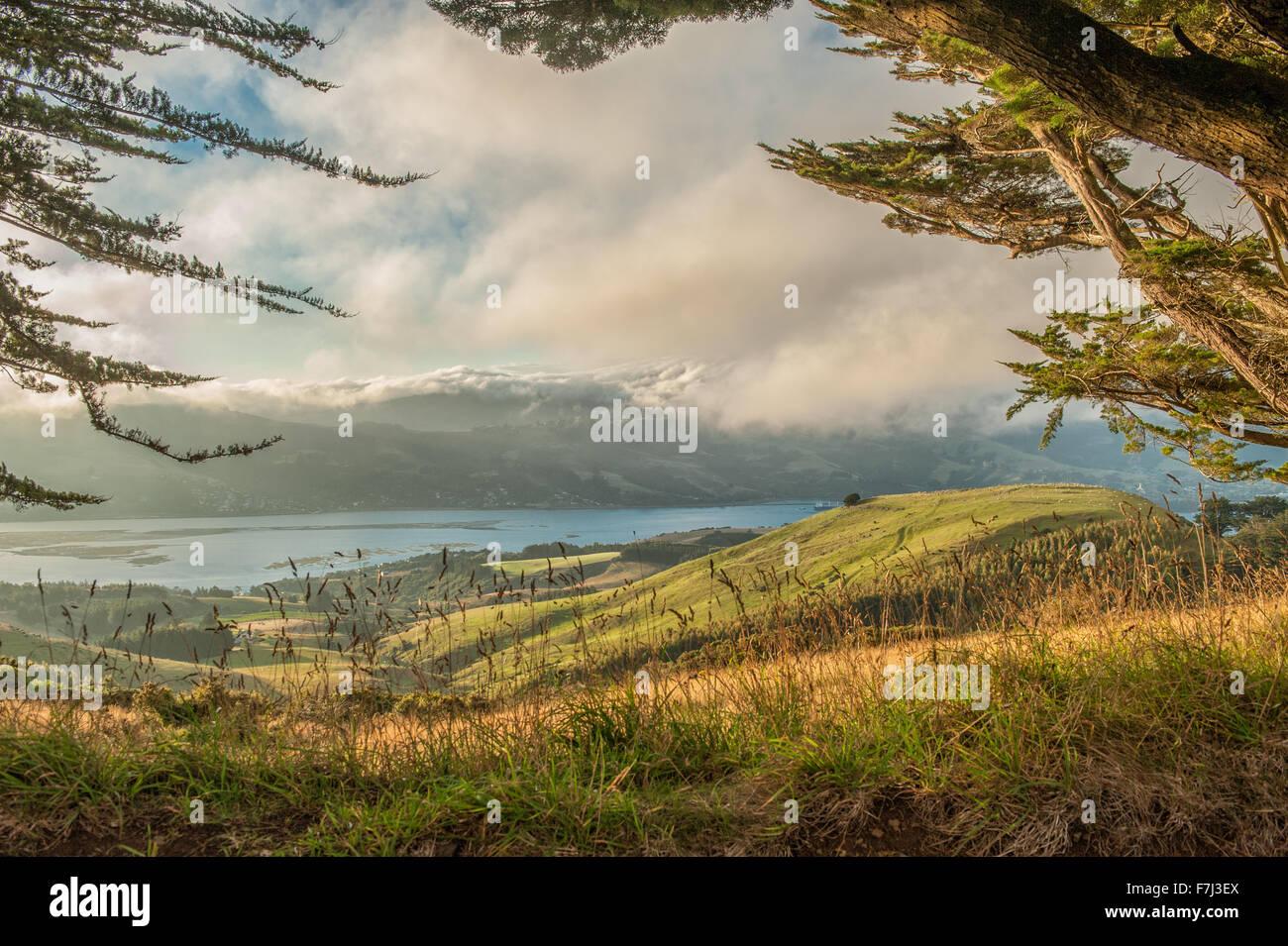 Pâturages de Péninsule d'Otago, île du Sud, Nouvelle-Zélande Banque D'Images