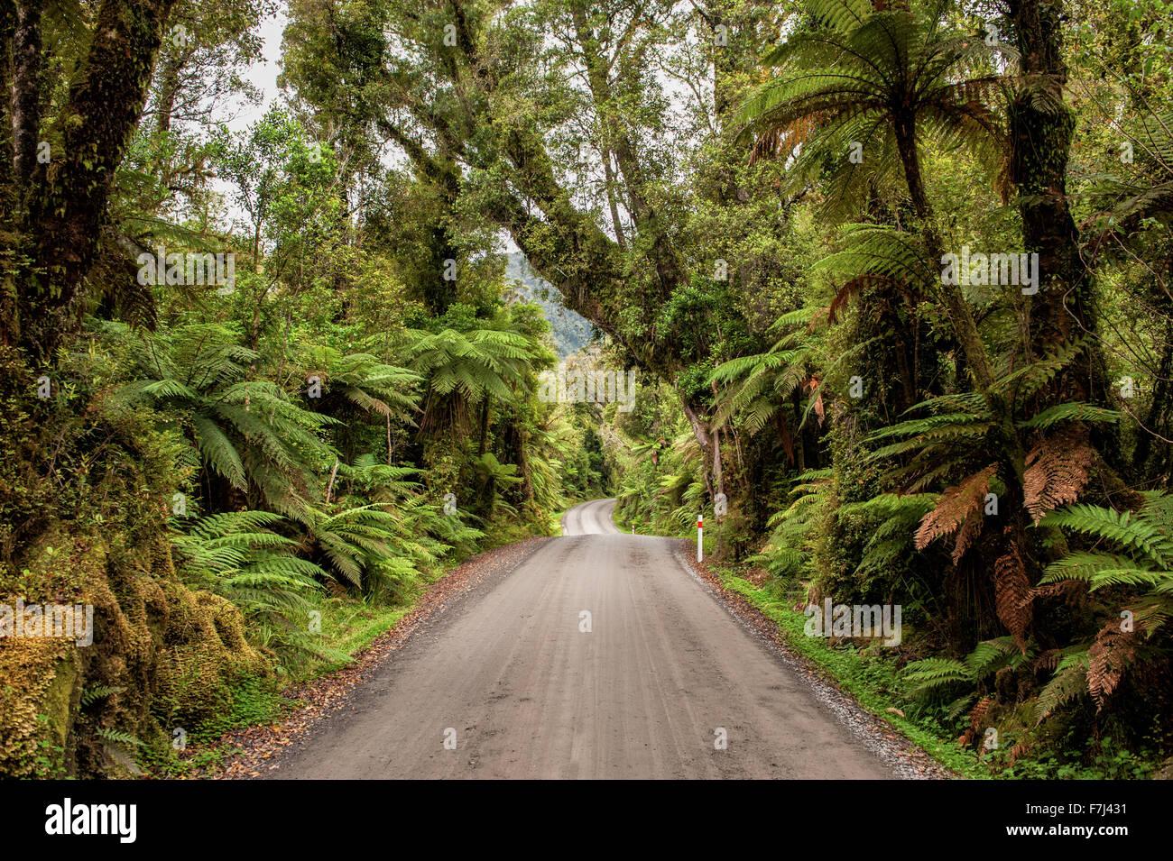 Route de gravier sinueuse à travers la forêt tropicale dans la région de Glacier Country, West Coast, Photo Stock