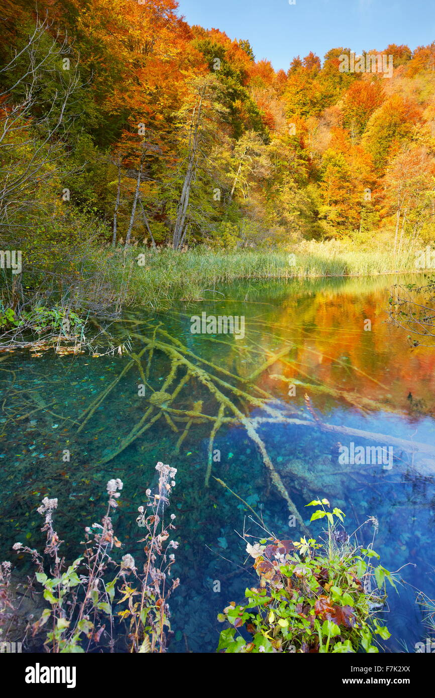 Le parc national des Lacs de Plitvice, Croatie, Europe Photo Stock