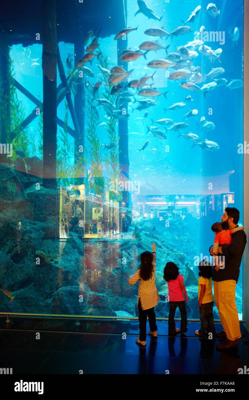 L'aquarium de Dubai Mall, Dubai, Émirats arabes unis, Moyen Orient Photo Stock
