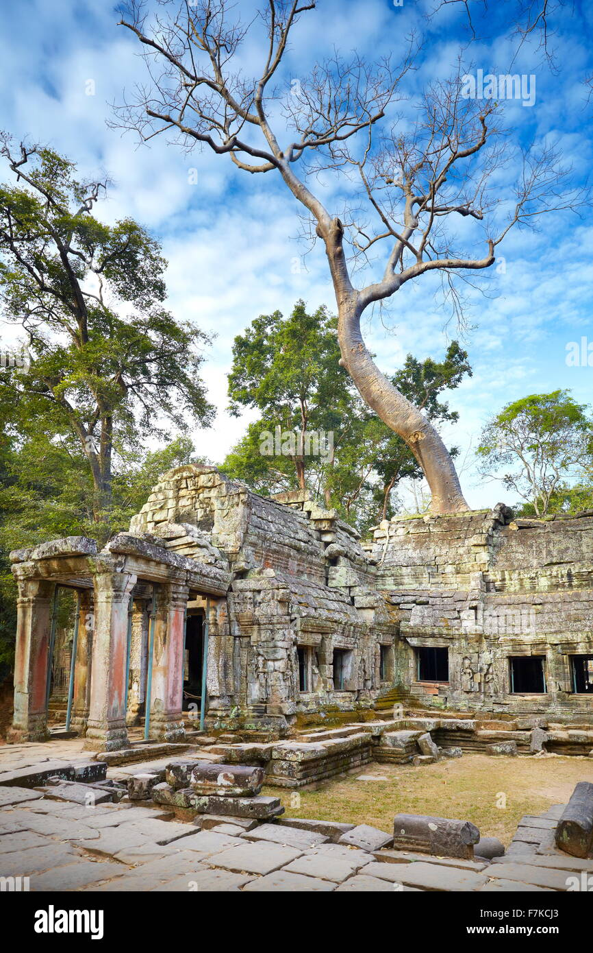 Les ruines de Ta Prohm Temple, Angkor, Cambodge, Asie Photo Stock