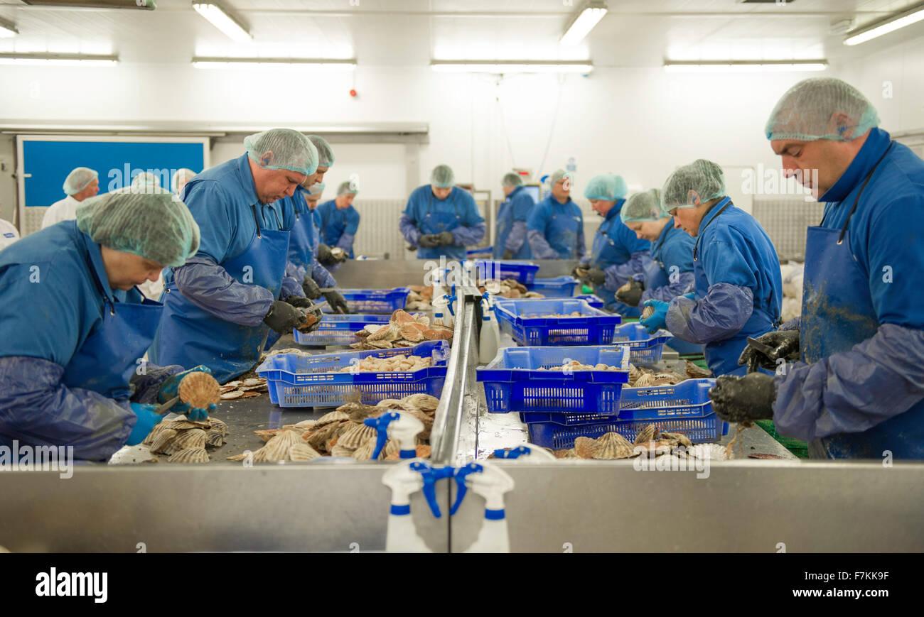 Travailleurs étrangers dans une usine de poisson au Royaume-Uni Photo Stock