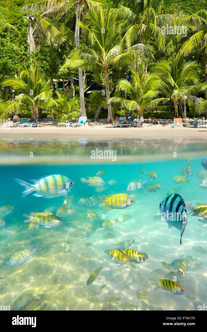Thaïlande - sous-marins tropicaux sur la mer avec des poissons à l'Île de Ko Samet, Thaïlande, Photo Stock
