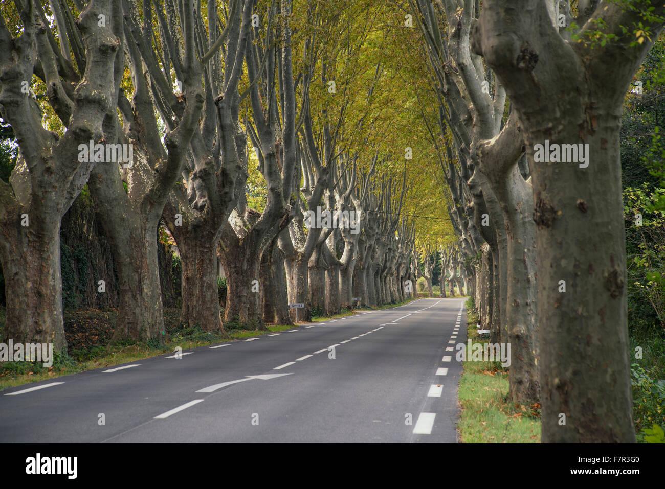 Allée de platanes, près de Saint Rémy de Provence, Photo Stock