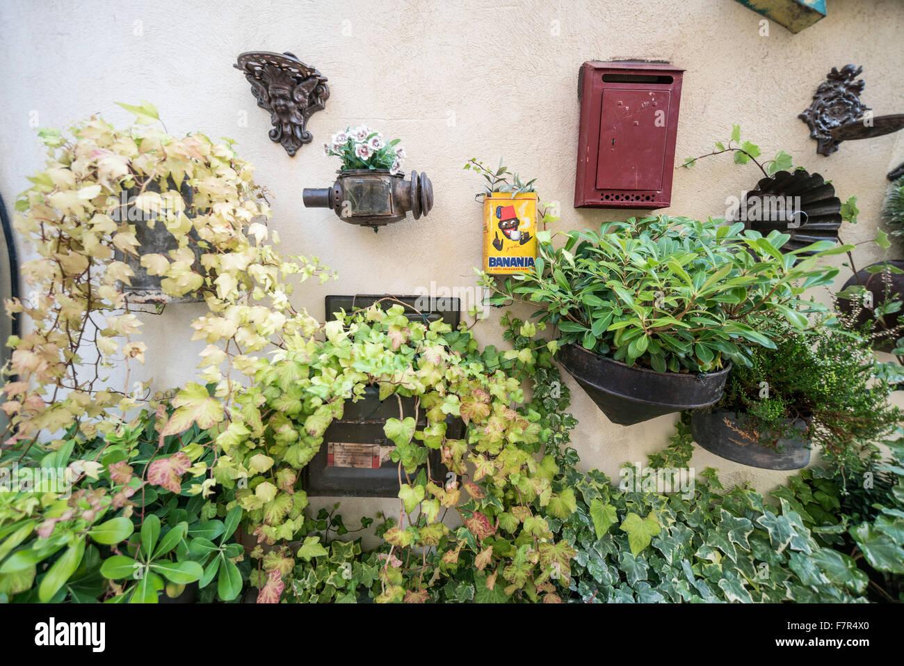 Mur de fleurs, St Rémy de Provence, Provence, France Photo Stock