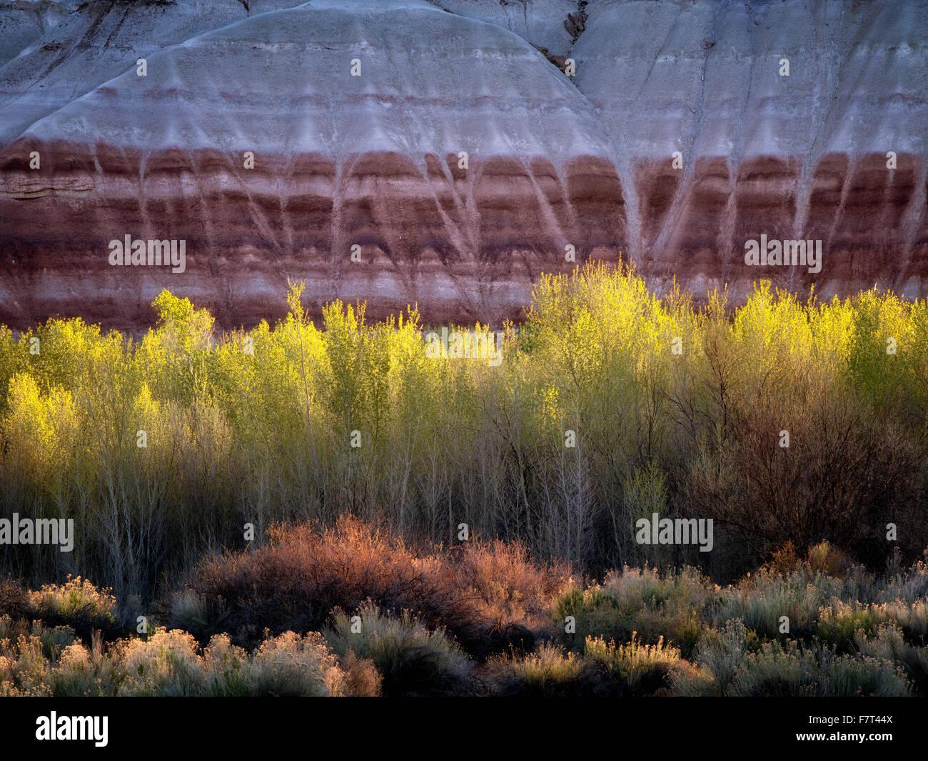 Peupliers et de falaises colorées. Capitol Reef National Park, Utah Photo Stock