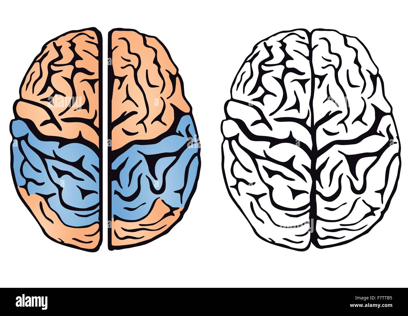 L'intelligence du cerveau Photo Stock
