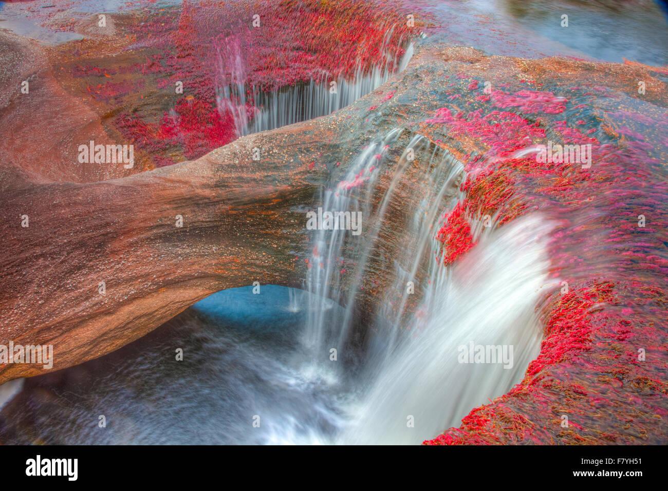 Couleurs à Cano Cristales, Colombie plantes subaquatiques (Macarenia clarigera) endémique au petit ruisseau Photo Stock