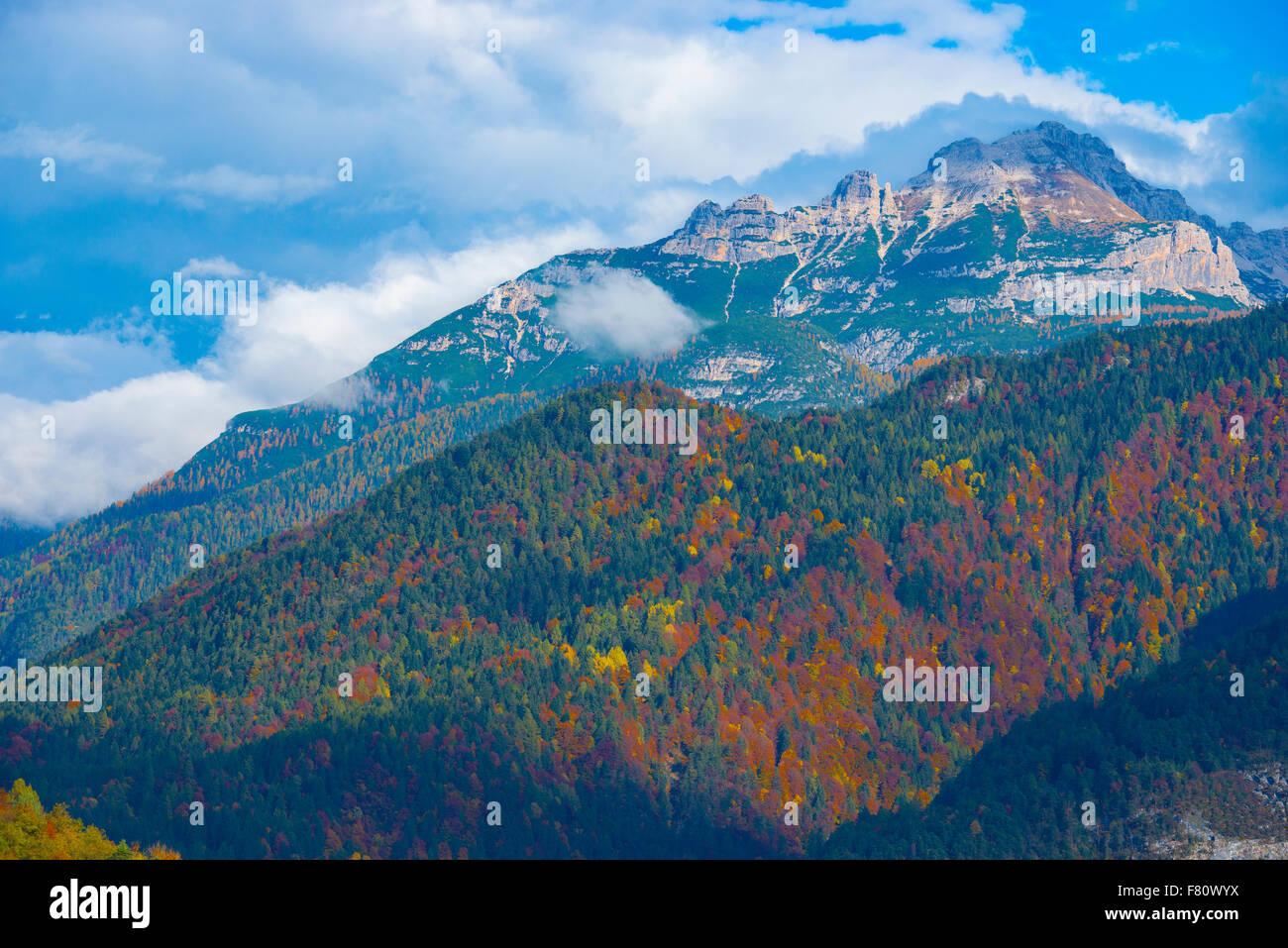 Forêt de mélèzes, dans les Dolomites, Dolomiti D'Ampezzo, Italie, Parc National des Alpes italiennes Photo Stock