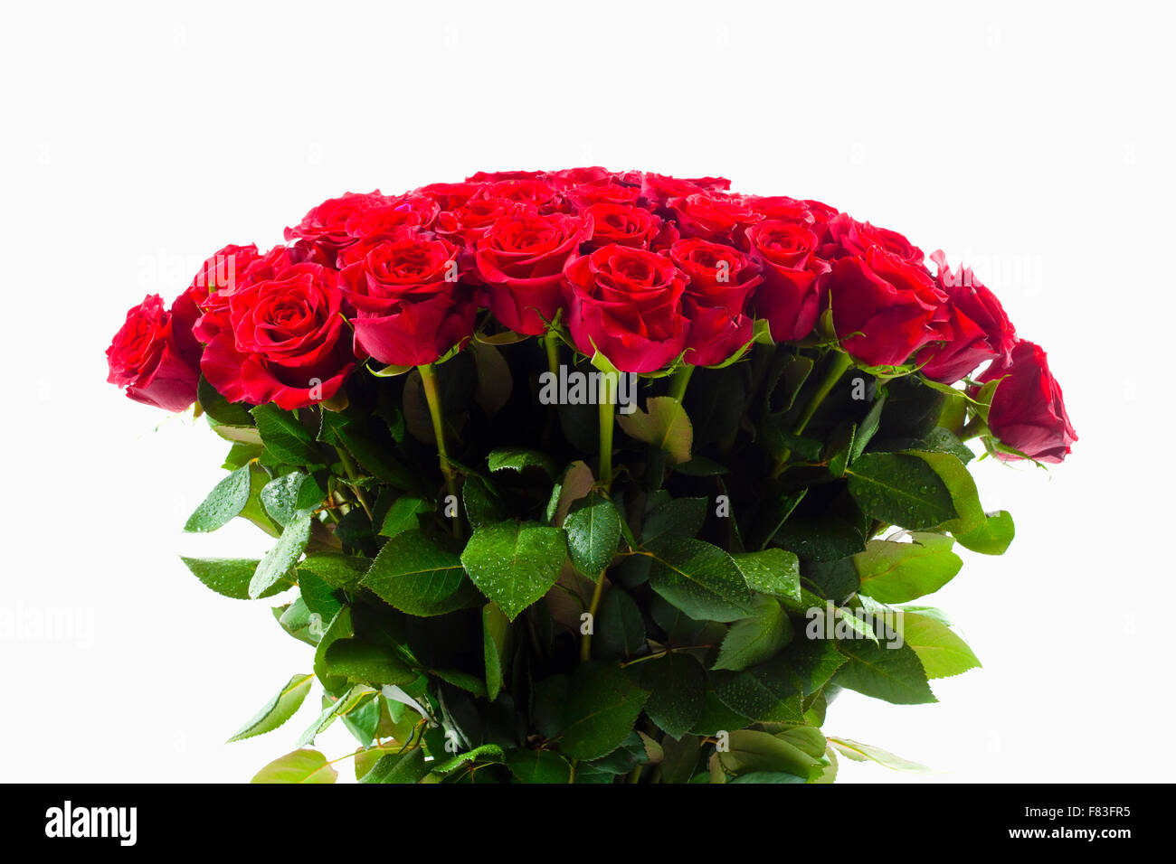 Bouquet de roses rouges - Isolated on White Photo Stock