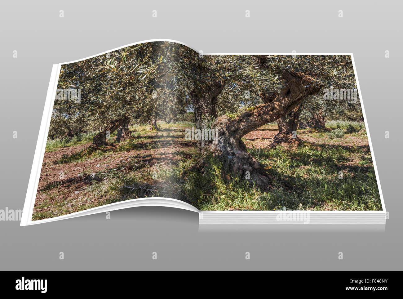 Il Cultive L Olivier l'olivier est un chat de taille moyenne, souvent d'arbres
