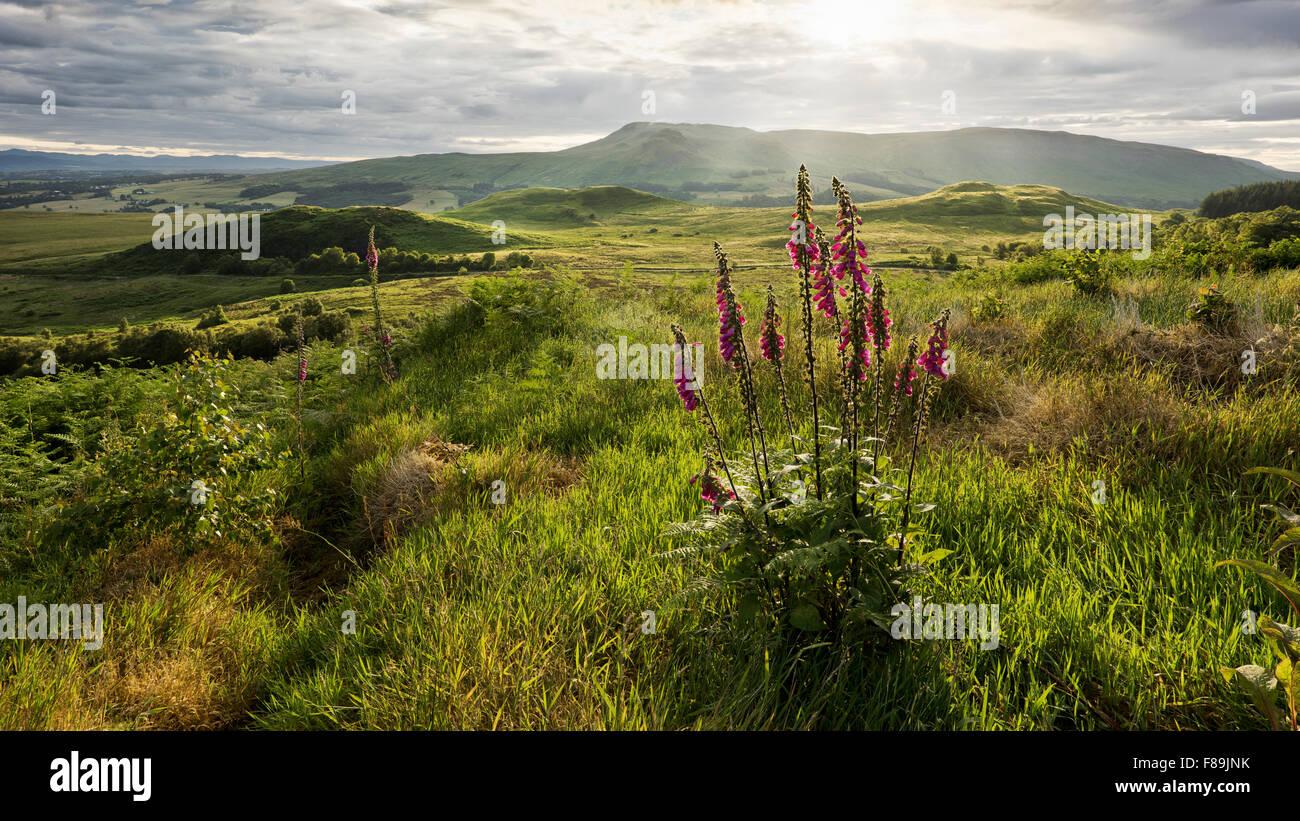 Montagnes Campsie Fells, Ecosse, Europe Photo Stock